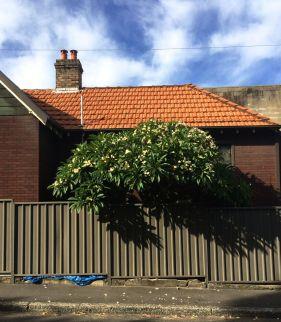house and treeIMG_5010