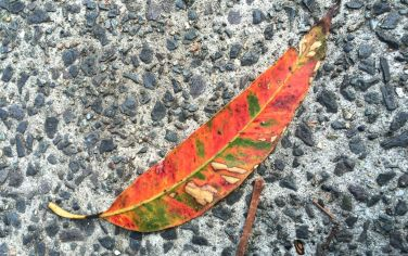 leafIMG_5063
