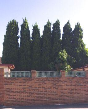 squashed treesIMG_4980